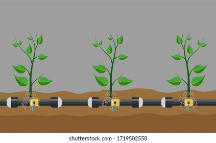 Underground or in ground drip irrigation system. Water irrigation. Automatic sprinklers system. Vector illustration flat design. Smart farming application concept. Saving water and time