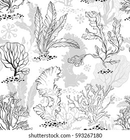 Underwater life. Seamless monochrome background with algae. Vector illustration.