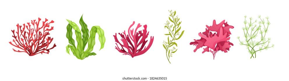 Underwater marine flora set. Marine aquarium flora, aqua plants, coral reef underwater seaweed ocean plants phytoplankton, algae, laminaria, sea moss tropical sea plant underwater painting vector - Shutterstock ID 1824635015