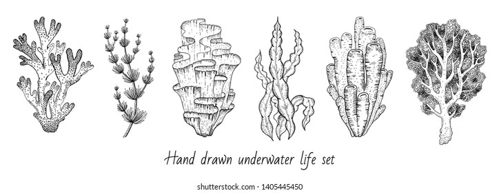 Underwater sea icon set. Coral, seaweed sketch graphic elements. Trendy coral reef under water collection. Black line engraved style. Cool hand drawing vector illustration isolated on white background