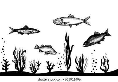 underwater seascape with fish and algae. Hand vector drawing