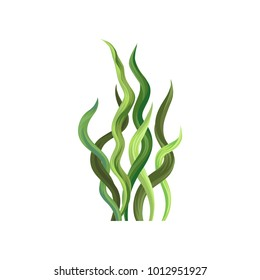 Underwater seaweed, aquatic marine algae plant vector Illustration