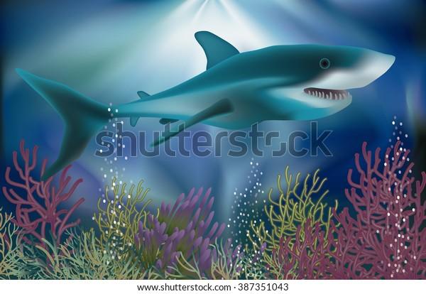 Underwater Wallpaper White Shark Vector Illustration Stock