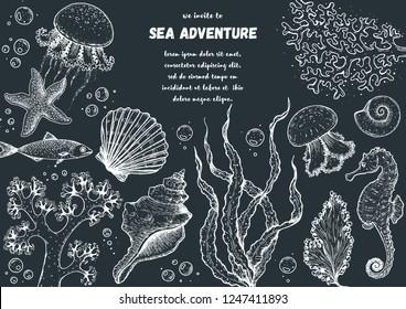 Underwater world hand drawn collection. Sketch illustration. Seaweed, coral, seashells, starfish, jellyfish, fish illustration. Vintage design template. Undersea world collection.