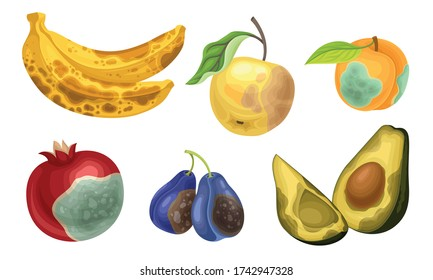 Unfit Fruits with Skin Covered with Stinky Rot Vector Set