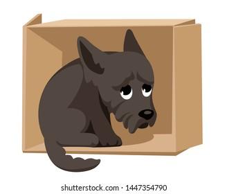 unhappy stray puppy sitting in a cardboard box