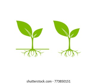 Unique Sprout Seed Grow Vector Illustration