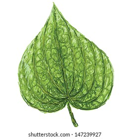 unique style illustration of betel or piper betle heart-shaped leaf isolated in white background.