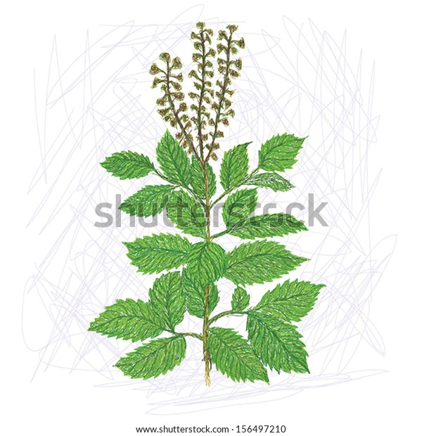 Unique Style Illustration Exotic Plant Holy Stock Vector