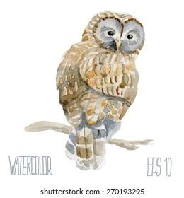 Ural owl. Vector Watercolor illustration.