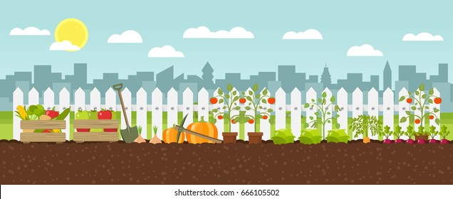 urban gardening planting growing vegetables flat design vector graphic