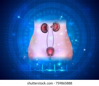 Urinary system health care on a bright blue abstract scientific background and normal cardiogram line at the bottom
