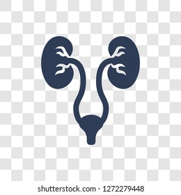 Urology icon. Trendy Urology logo concept on transparent background from Health and Medical collection