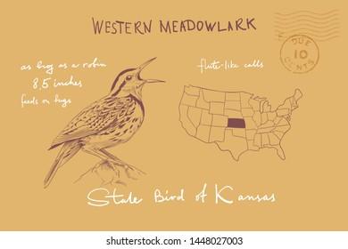 Western Meadowlark Images Stock Photos Vectors Shutterstock