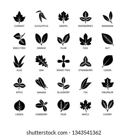 Useful leaves silhouette linear icons vegan analysis vector set of design elements leaf tree bush berry healthy food vector symbol set