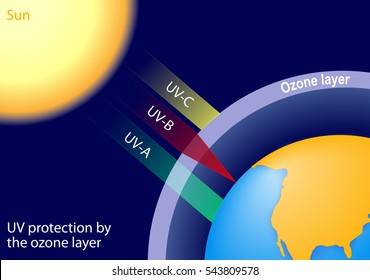 UV protection by the ozone layer. UV-B radiation is partially absorbed, UV-A are not strongly absorbed by the ozone layer and most of this radiation reaches the surface the Earth.