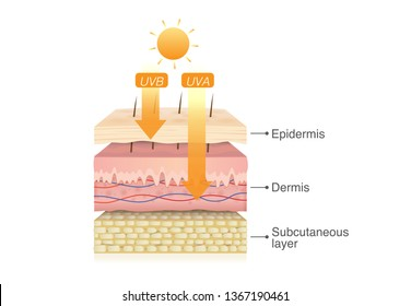 UVB rays from sun penetrate into epidermis of skin layer and UVA deep into the dermis. Illustration about health care and medical diagram.