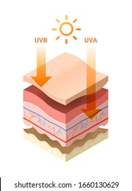 uvb uva rays from sun penetrate into epidermis of skin cross-section of human skin layers structure skincare medical concept flat vector illustration