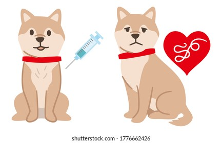 Vaccinated dogs and dogs infected with heartworm