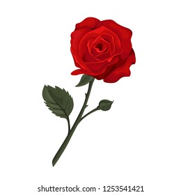 Valentine`s day card. Red roses isolated. Vector illustration.