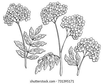 Valerian graphic black white isolated sketch illustration vector
