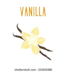 Vanilla beans. Vector EPS 10 hand drawn illustration.