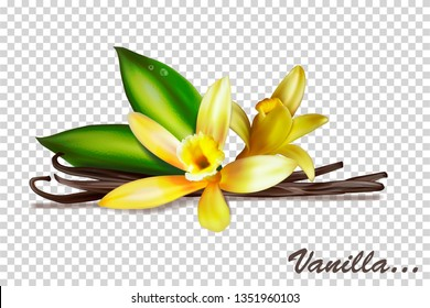 Vanilla bunches with flowers and leaves. Vector illustration isolated on a transparent background.