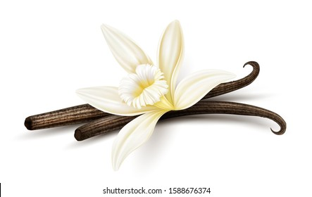 Vanilla flower with dried vanilla sticks. Realistic food cooking condiment. Aromatic seasoning ingredient for cookery and sweet baking, Isolated on white background. Eps10 vector illustration.