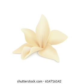 Vanilla flower, isolated on white background. Realistic vector illustration.