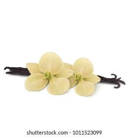 Vanilla flower with pods.