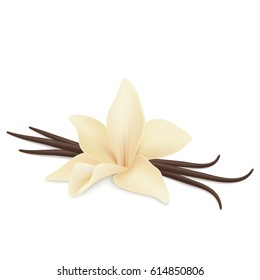 Vanilla flower and pods isolated on white background. Realistic vector.