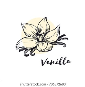Vanilla flower sketch ink vector illustration