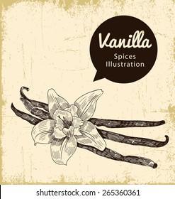 vanilla illustration on background. vector