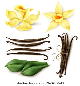 Vanilla plant realistic set with fresh yellow flowers aromatic dried brown beans and leaves isolated vector illustration