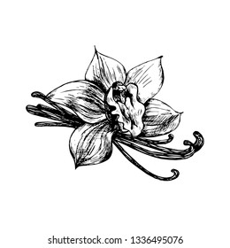 Vanilla, spice. Flower. Vector illustration, sketch, handmade.  Spice for use in cooking. Design element for packaging.