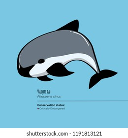 Vaquita marina also known as Cochito is on the brink of extinction.