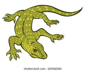 Varan vector illustration