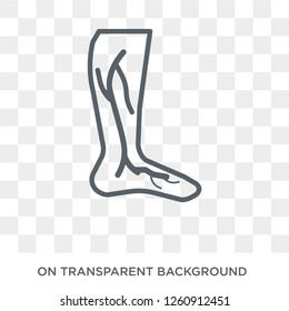 Varicose veins icon. Trendy flat vector Varicose veins icon on transparent background from Diseases collection. High quality filled Varicose veins symbol use for web and mobile