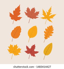 Variety of Autumn Leaves - Vector