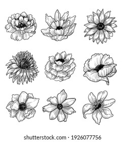 A variety of colorless flowers