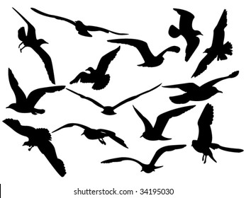 variety flying sea-gulls vector illustration