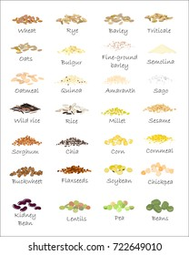 A variety of grains and cereals. Wheat, barley, oats, rye, buckwheat, amaranth, rice, millet, sorghum, quinoa, chia seeds, oatmeal, legumes. Vector isolated