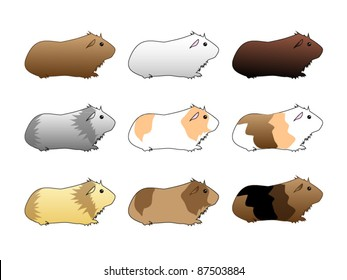 variety of guinea pigs