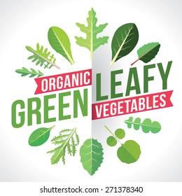 A variety of leafy greens vegetables. Vector illustration
