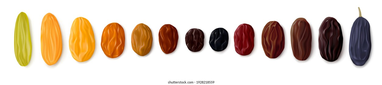 A variety of raisins. Row of dried grapes in different colors and sizes. White background. Top view. Realistic vector illustration