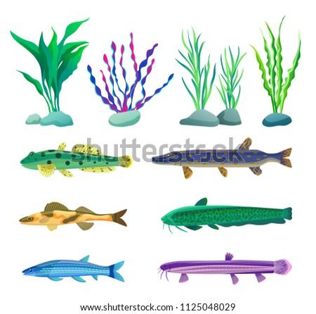 Various Algae Type Predatory Aquarium Fish Stock Vector Royalty