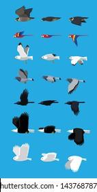 Various Bird Flying Sequence Cute Cartoon Vector Illustration