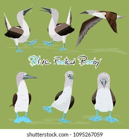 Various Blue-footed booby birds isolated