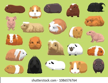 Various Breeds Guinea Pig Cartoon Vector Illustration