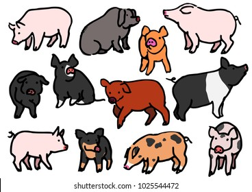 various breeds of pigs